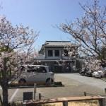 桜に囲まれたテレワークひろば