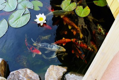 water-feature-koi-pond-009