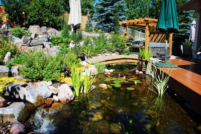 water-feature-koi-pond-pergola-032