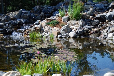 water-feature-koi-pond