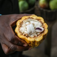Case Study:  Niche Cocoa Industry Ltd. Improving Productivity in it's Cocoa Processing Activities in Ghana...