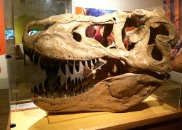 Ananyah- Hatching the Patch- Kelvingrove- Dinosaur Head
