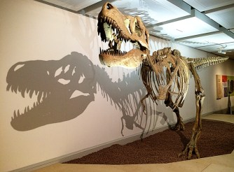 Ananyah- Hatching the Patch- Kelvingrove-Dinosaur Museum