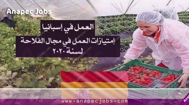العمل في إسبانيا .. فرص للمهاجرين 37 أورو عن كل يوم عمل