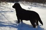 skeezix-snow-lookingaway