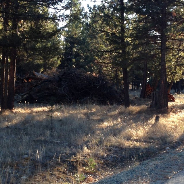 2014 brush pile from yard clean up