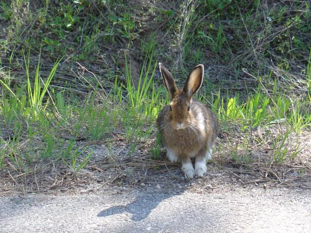 Bunny-Rod Flavell