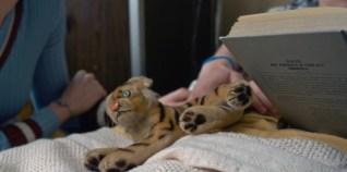 Tiger - Hospital - Stranger Things