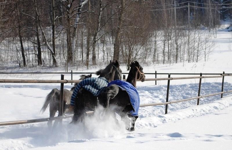 В леваде, лошади