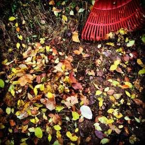 Опавшие листья в нашем саду