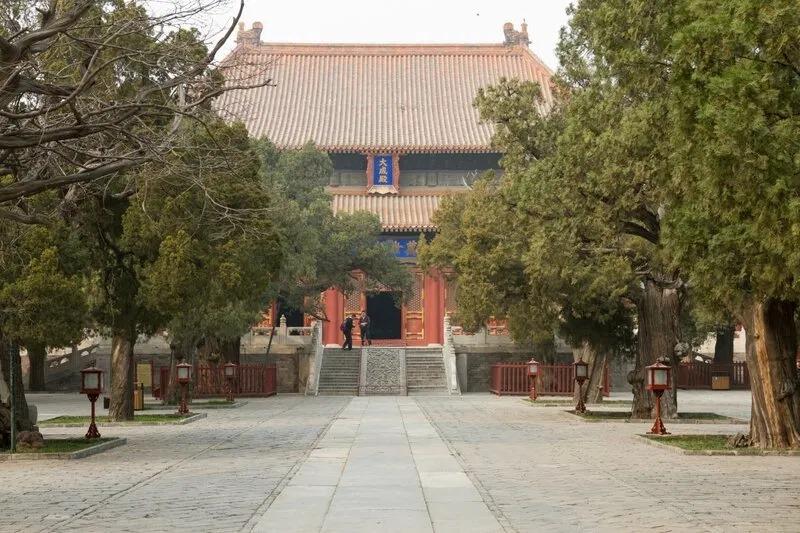 Кипарисы в храме Конфуция, Пекин
