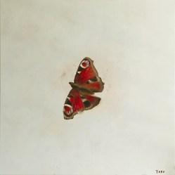 """""""Butterfly"""", acrylic on canvas, 60 x 60 cm"""