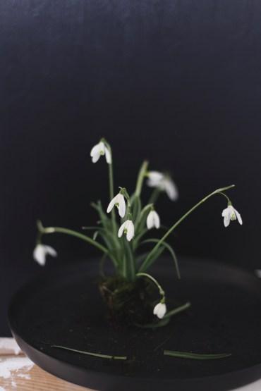 moody snowdrops via anastasiabenko.com