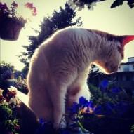 Patio Cat