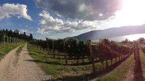 Grey Monk Vineyard, north of Kelowna