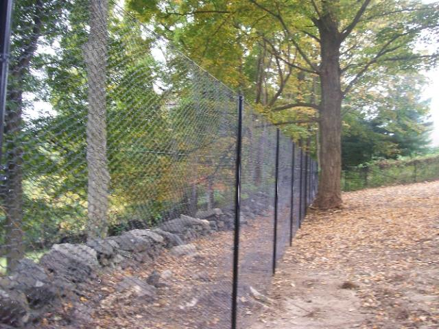 Deer Fences 8