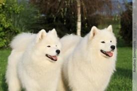 ShuShu & Mimi