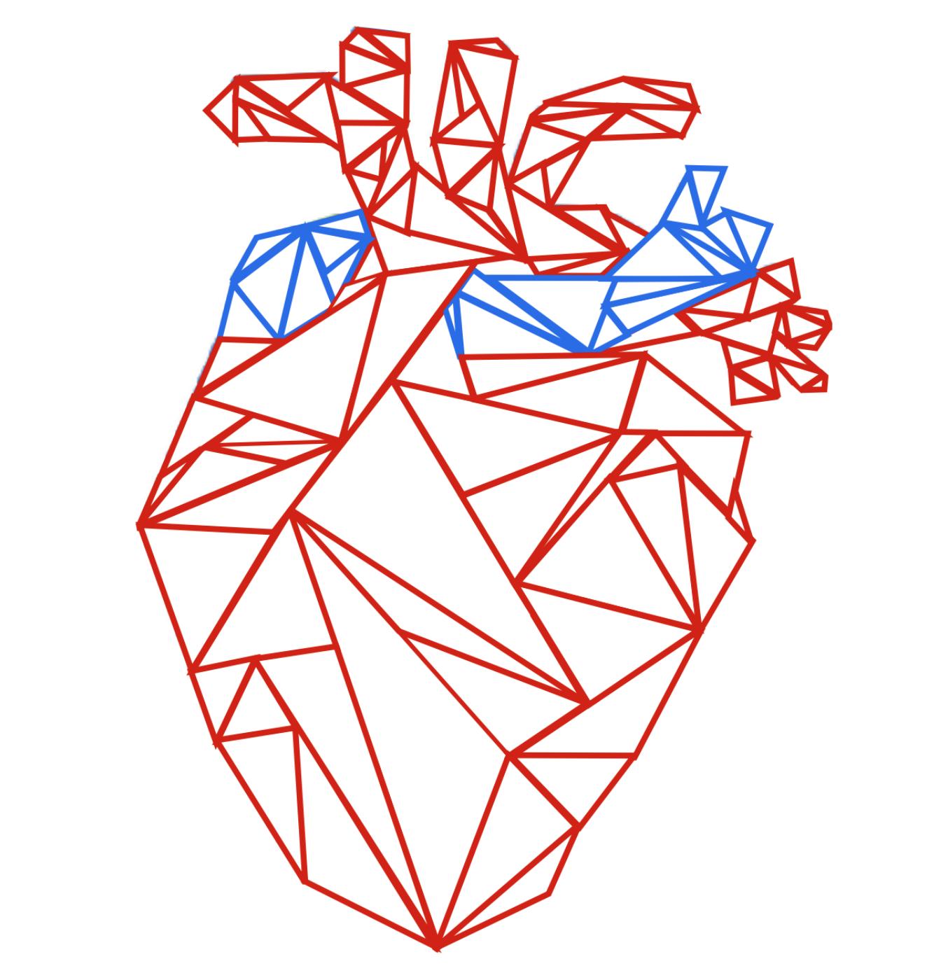Blood And Cardiovascular System Anatomy Academy
