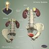 Anatomy Arcade - Jigsaws