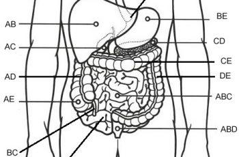 Label the Kidney - Anatomy Corner