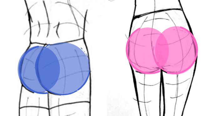 How to draw a butt, Glutes