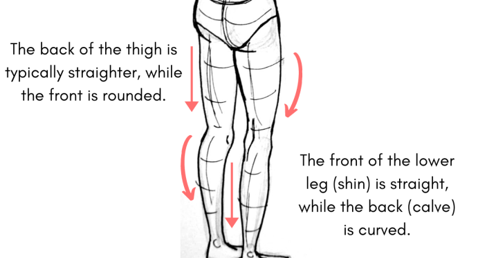 How to Draw Legs from Behind