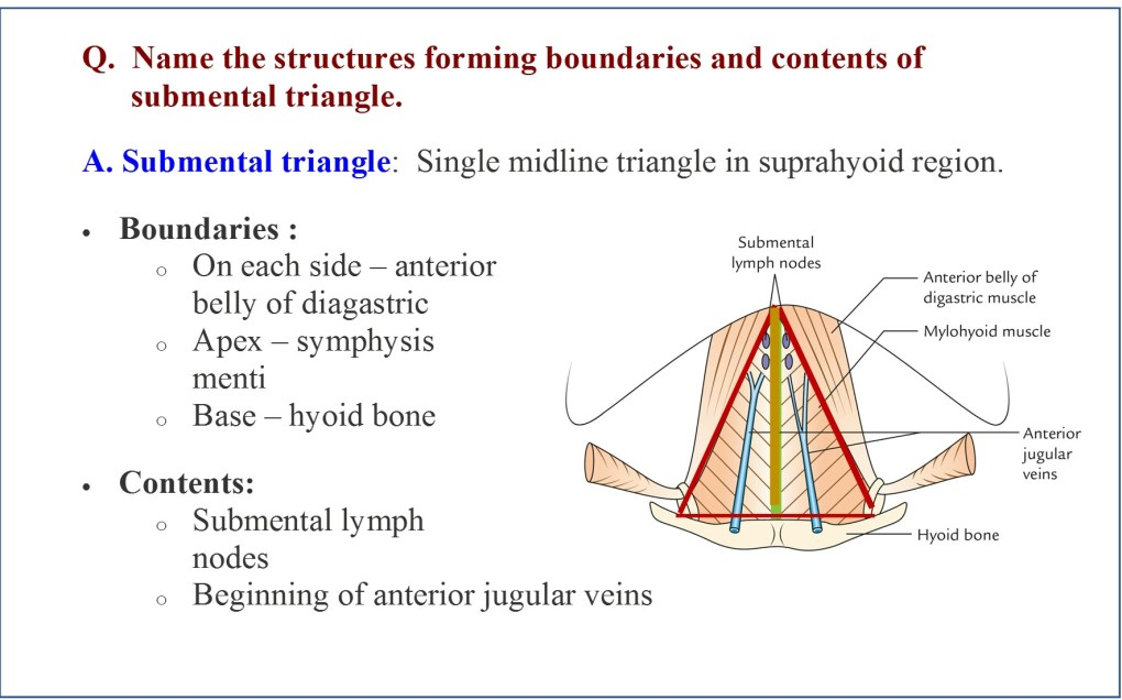 Boundaries and contents of submental triangle
