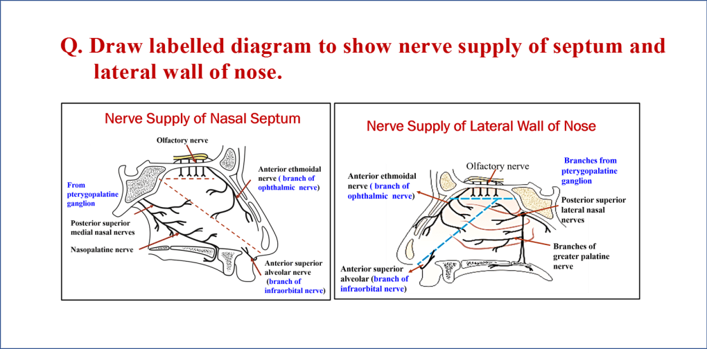 Nerve supply of nasal septum and lateral wall of nasal cavity