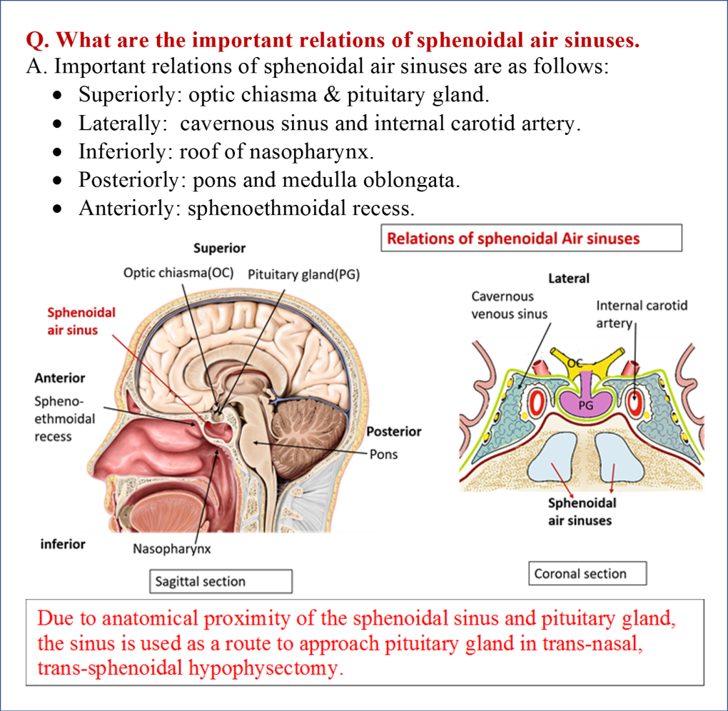 Anatomy of sinus 6172057 - follow4more.info