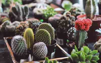 4 Reasons Cacti are Fascinating, Easy Houseplants