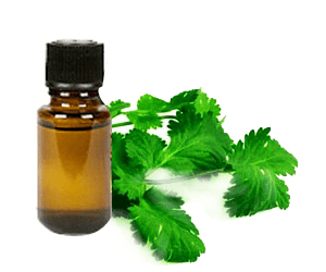 Coriander and its many benefits