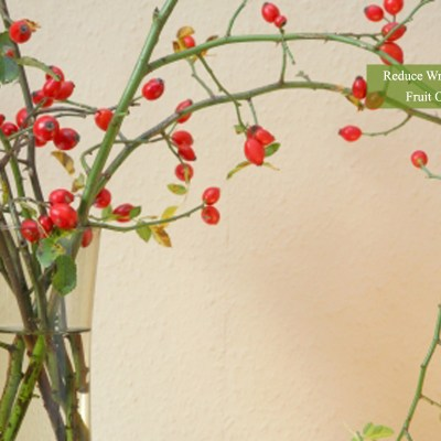 Reduce Wrinkles With Rosehip Seed Oil