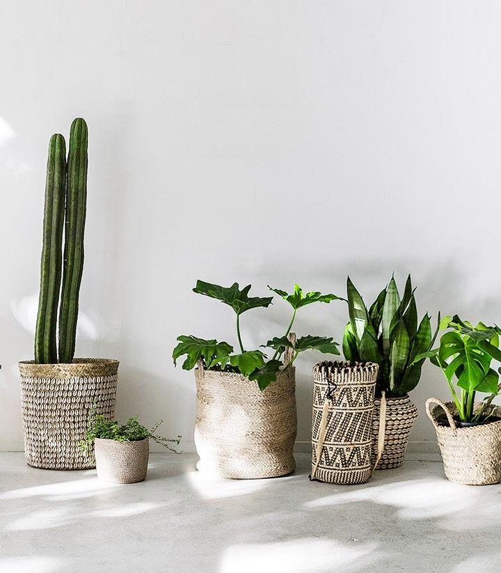 Decoración de interiores con plantas en verano