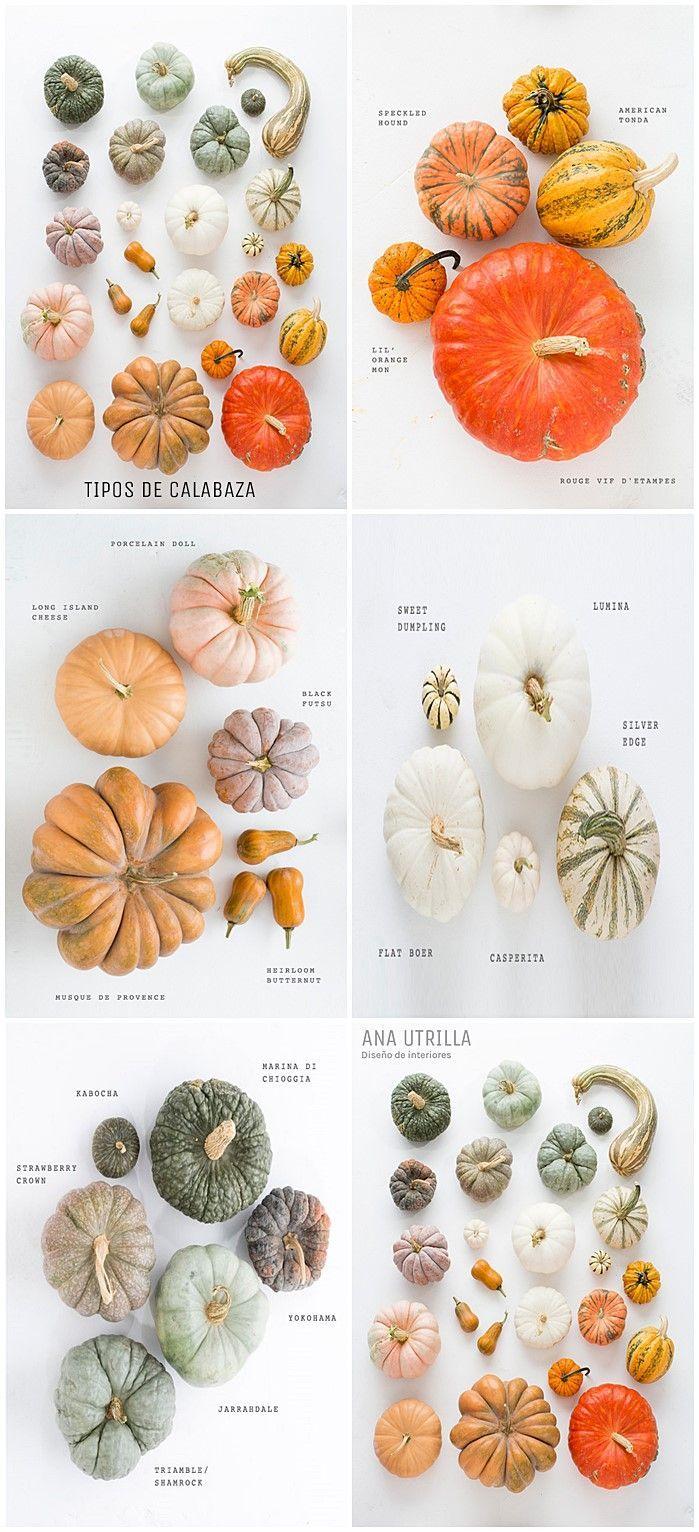 Mini-guía para conocer mejor las distintas especies de calabaza que existen para este #halloween #diy @Utrillanais
