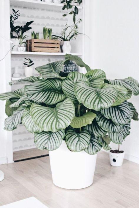 Decoración de interiores con plantas tendencias 2018