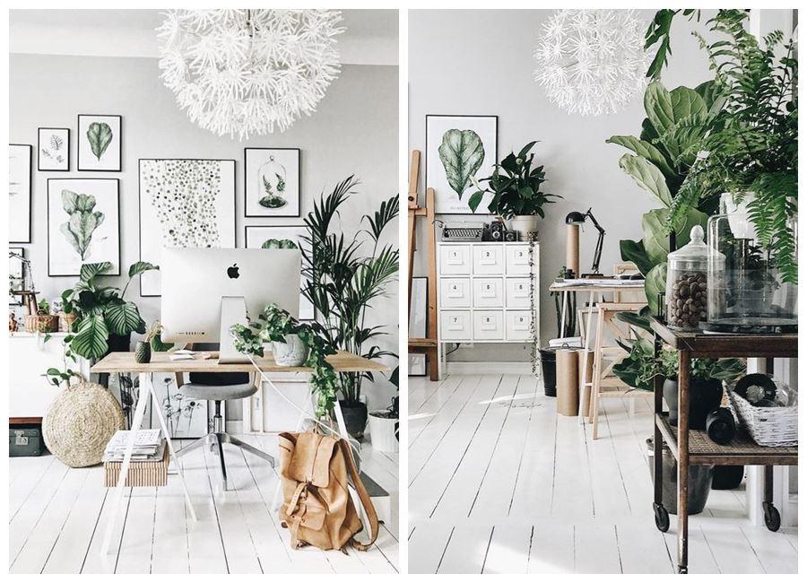 Coloca plantas en tu zona de trabajo u oficina en casa, aportan beneficios como un mejor ambiente y productividad #homeoffice @utrillanais