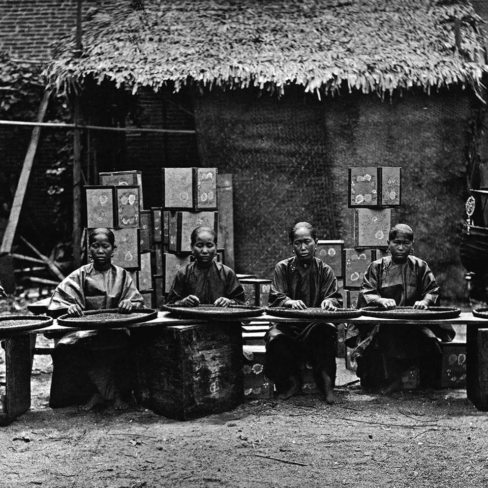 Anbassa-artisan-torrefacteur-breve-histoire-du-the-tea-au-canton-min-min