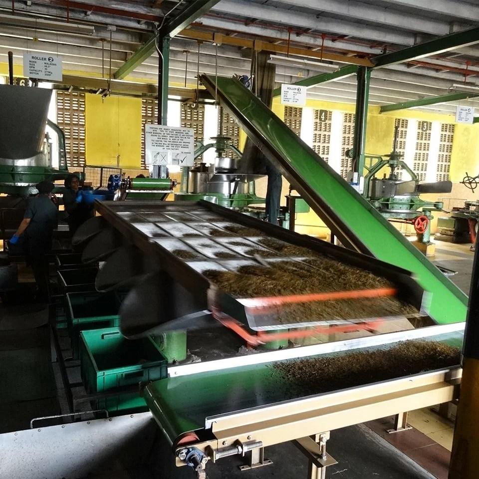 Anbassa-artisan-torrefacteur-different-type-de-the-Glenloch-tea-factory (3)-min
