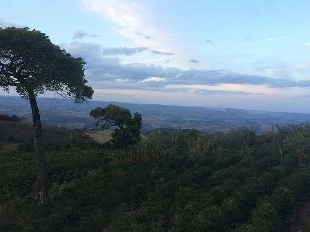 anbassa-artisan-torrefacteur-brésil-fortaleza-plantation
