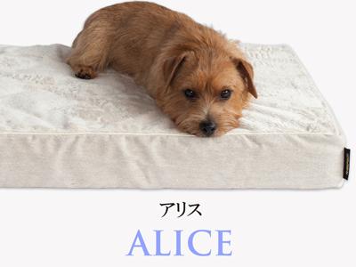 Banner-slide_alice