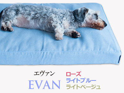 Banner-slide_evan-lb
