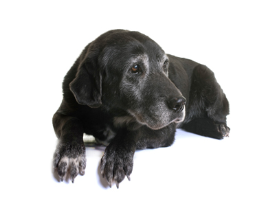 Product_for-seniordogs