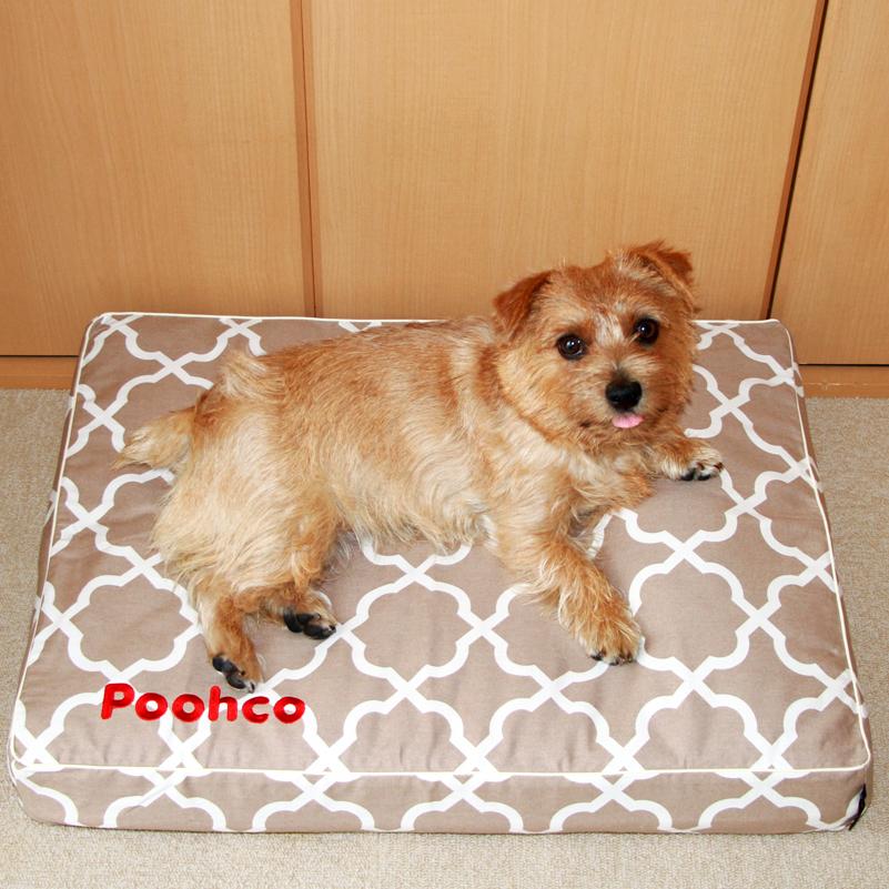 poohco01-2