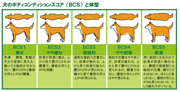 「ボディコンディションスコア 犬」の画像検索結果