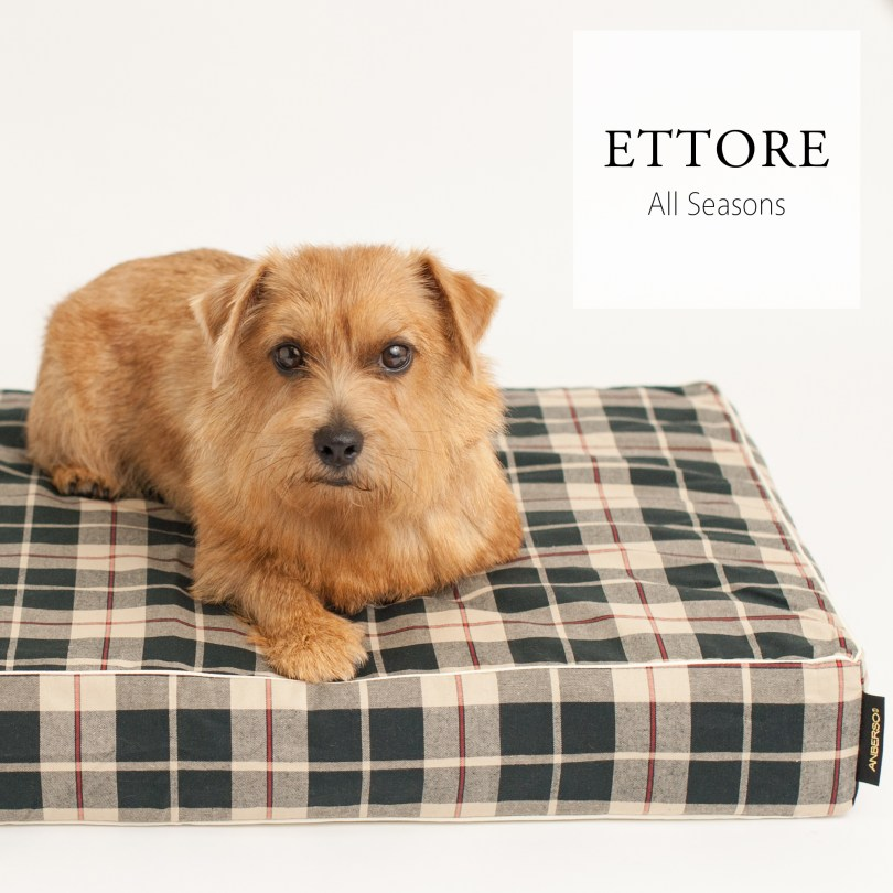 Ettore-sq2