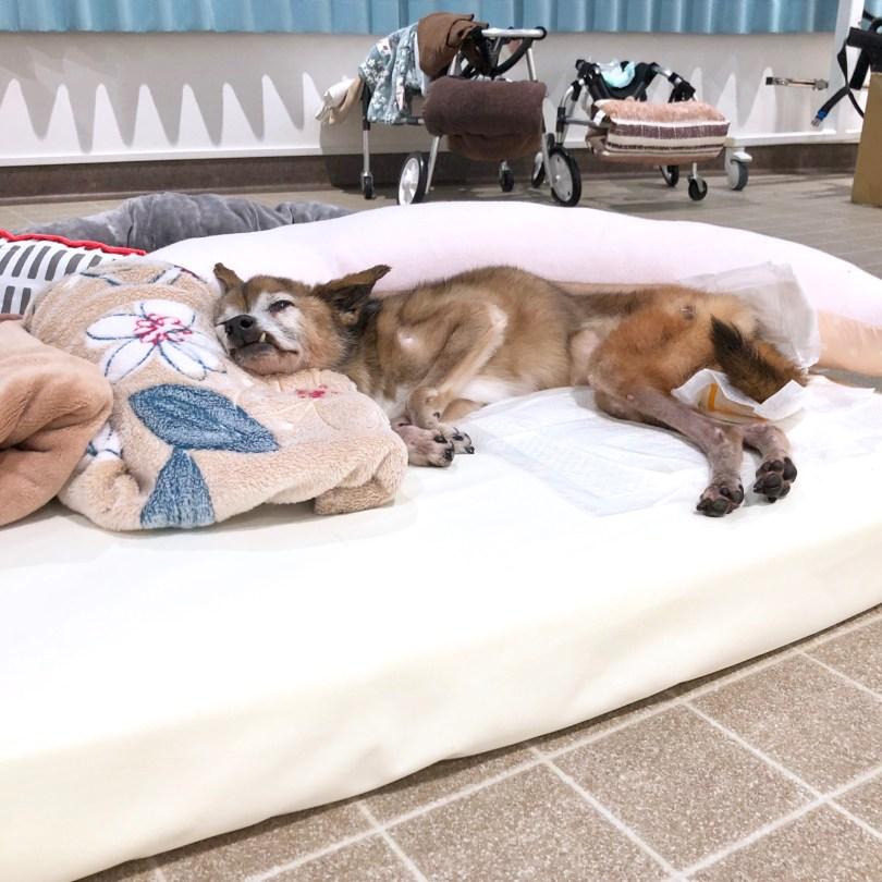 犬のベッド アンベルソ