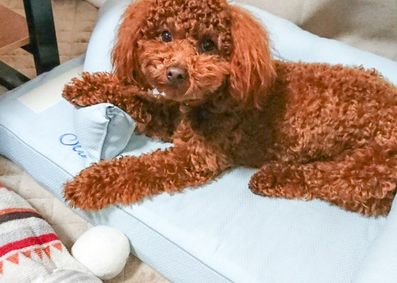 犬のベッド|アンベルソ