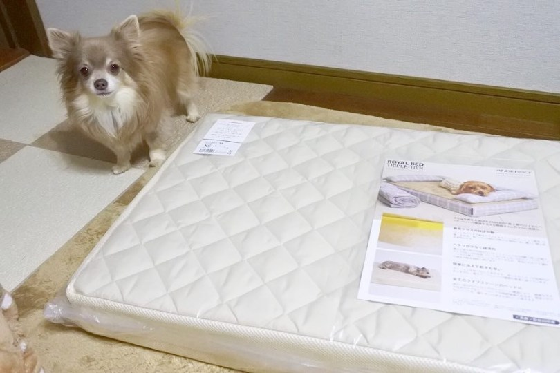 犬のベッド|アンベルソ公式ブログ