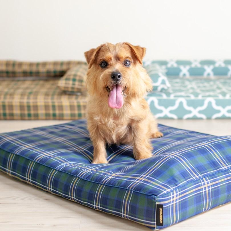 ベッドカバー「オーガニック・サマーリゾート」 犬の洗える日本製ベッド:ロイヤルベッド - アンベルソ