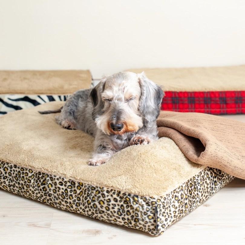 シニア犬・高齢犬のベッド選びと入れ替え時期